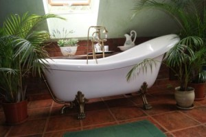 Растительность в ванной комнате